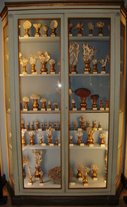 Corals and sponges cabinet