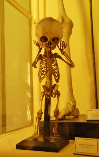 small skeleton